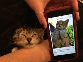 alan thomas kitten